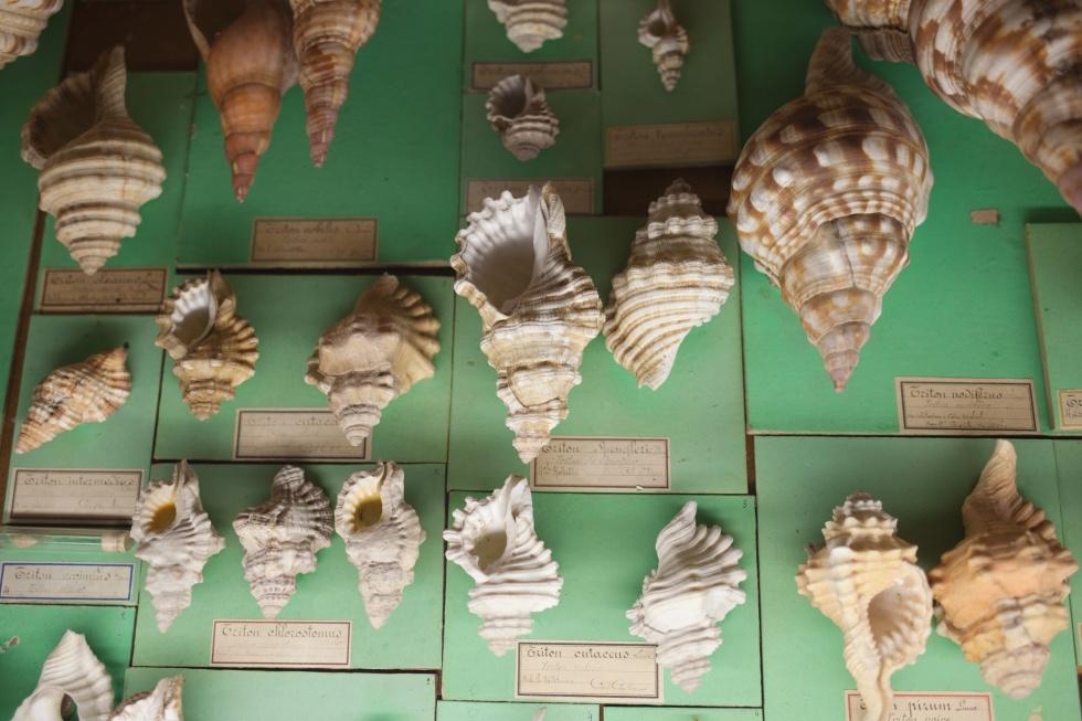 natural-history-museum-nantes